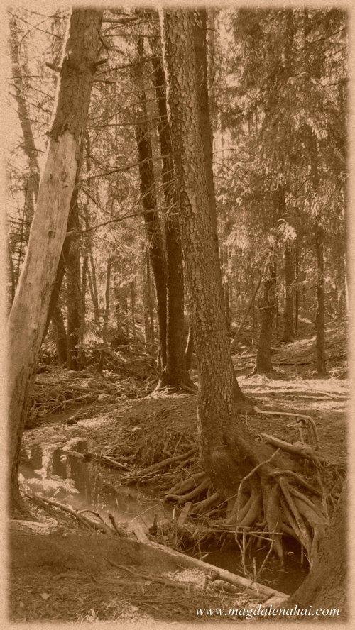 Synkän Tylsyyden Metsä2